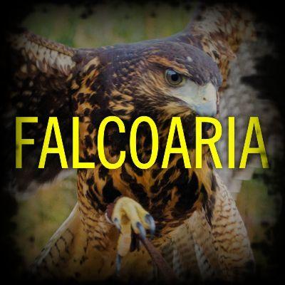 Falcoaria